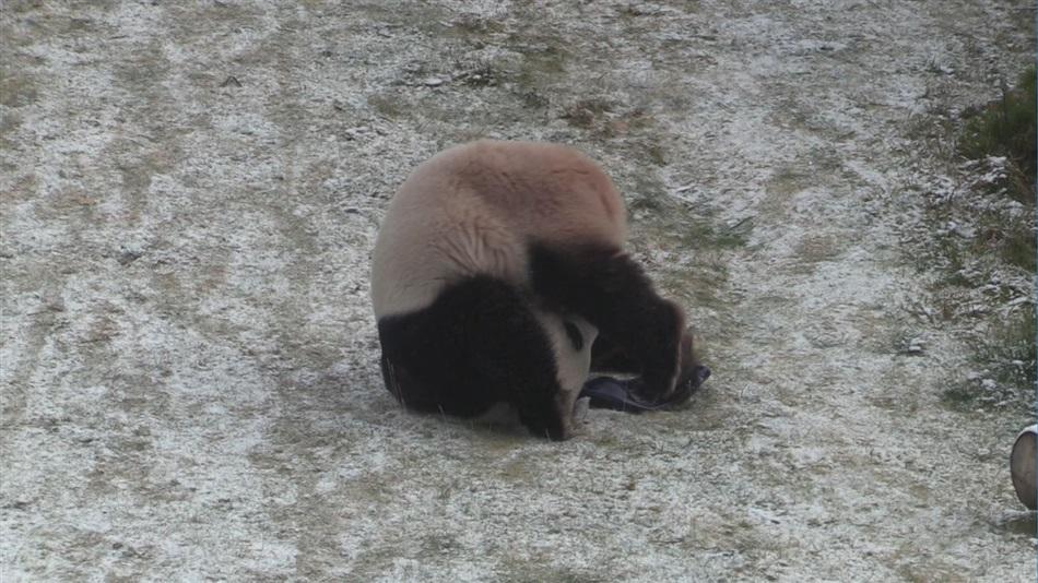 ähtärin Pandat