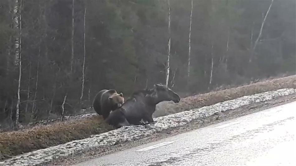 Karhunmetsästys Venäjällä Videot
