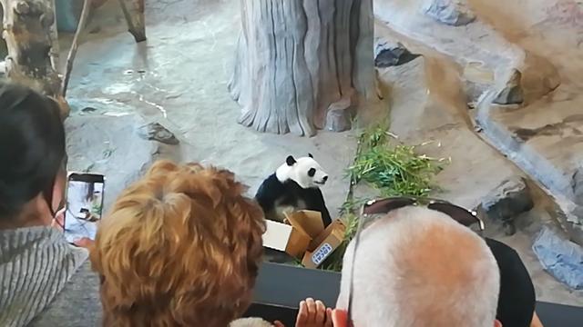 Ähtärin pandat, Pyry-panda avasi aamulla ensimmäisen syntymäpäivälahjansa